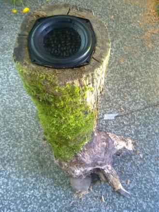 Meri´s cymatics tree trunk